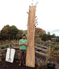 Beech Plank