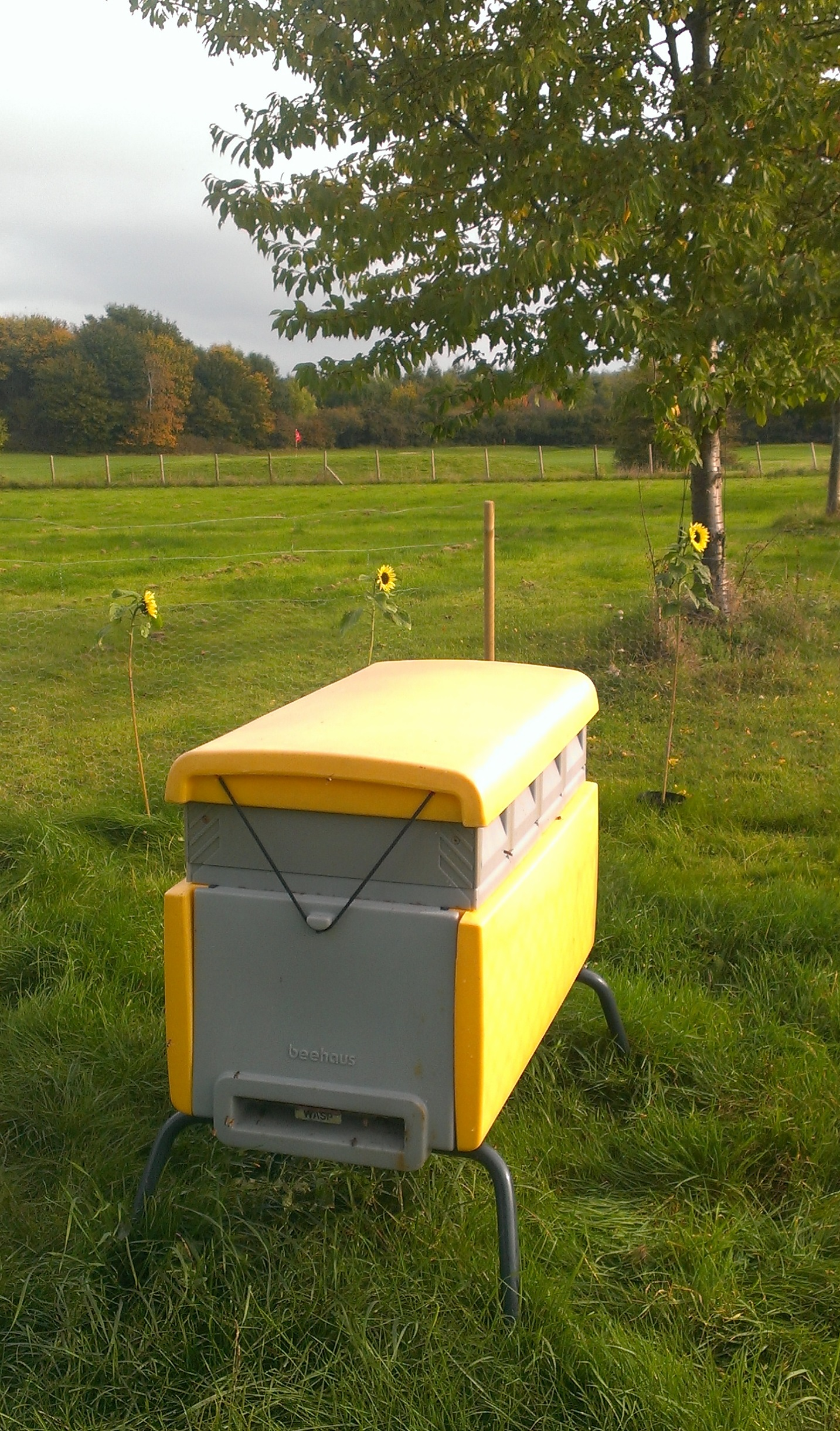 Beehaus hive