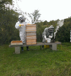 Opening a national hive