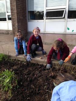 Planting bulbs6