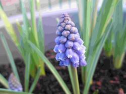 Spring flowers4