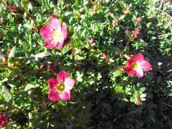 Spring flowers9