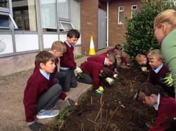Planting bulbs7