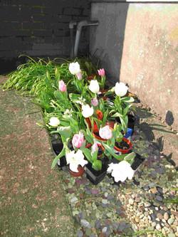 Spring flowers8