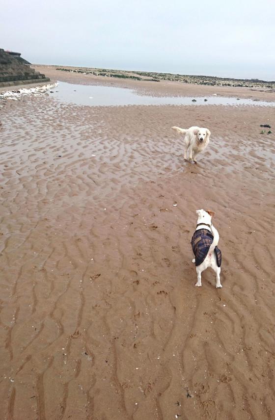 Beachfront Dog Standoff Enters Fourth Day