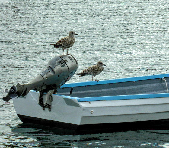 Seagull Boat Tours To Hold AGM In Thanet