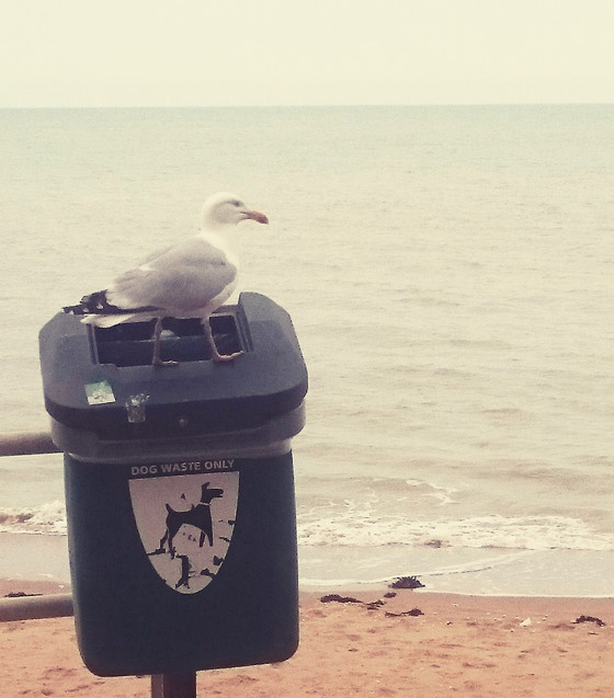 Thanet's Rubbish Crisis Solved