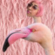 ANUM-in-the-flamingo.png