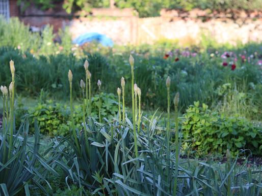 May Garden Journal