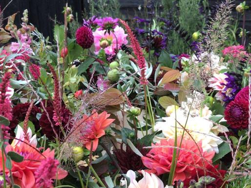 September Garden Journal