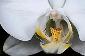 Macrofotografia de flor