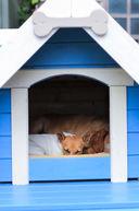 Blue Dog House.jpg