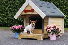 Daisy in a Doghouse.jpg