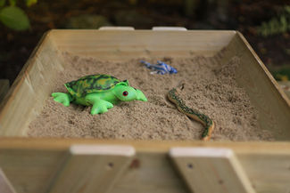 SandBox From Above Frog.jpg