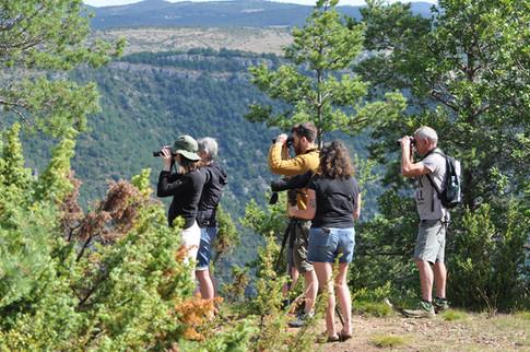 Initiation Ornitho au Roc des Hourtous - Causse Méjean - Gorges du Tarn - Gorge de la Jonte - Lozère