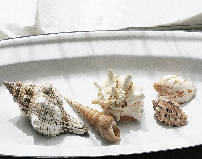 Five Shells- Landscape Orientation