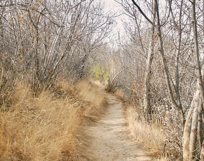 SoCal Winter- Landscape Orientation