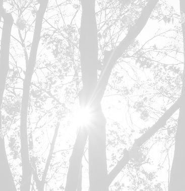 Blog042720_edited_edited.jpg