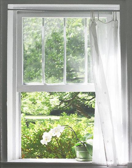 Orchid in the Window- Portrait Orientation