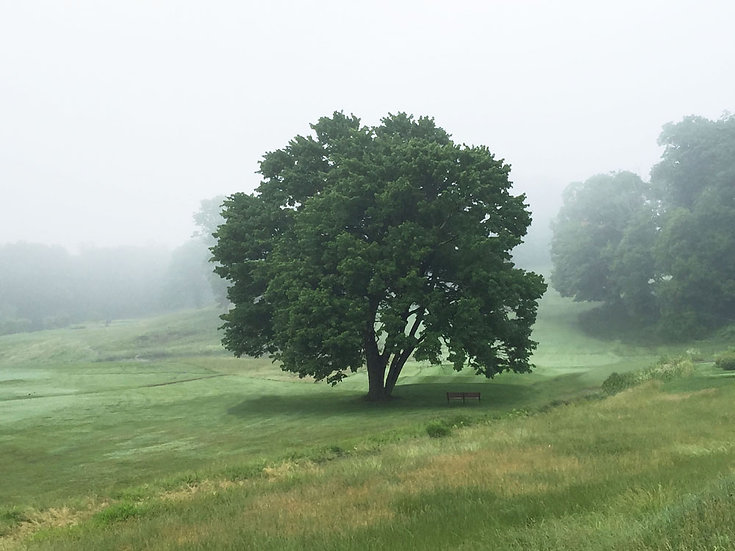 Summer Golf Course Tree - Landscape Orientation