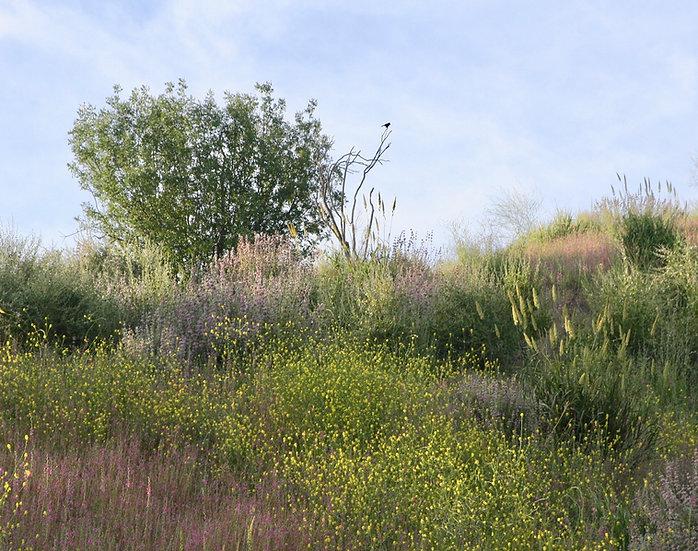 Eden - Landscape Orientation