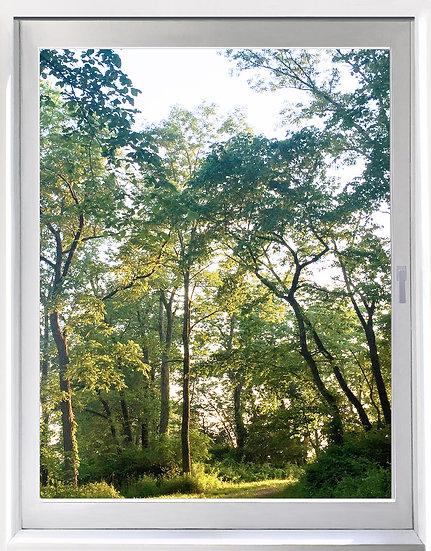 UW_Sunlight Woods - Portrait Orientation