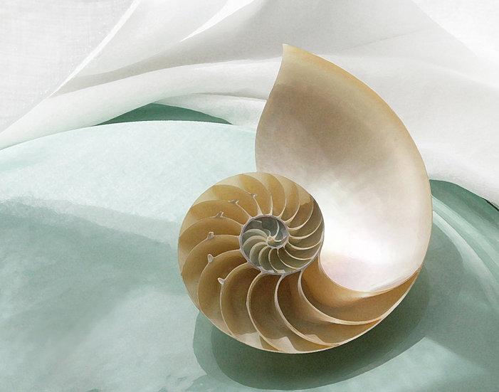 Nautilus- Landscape Orientation