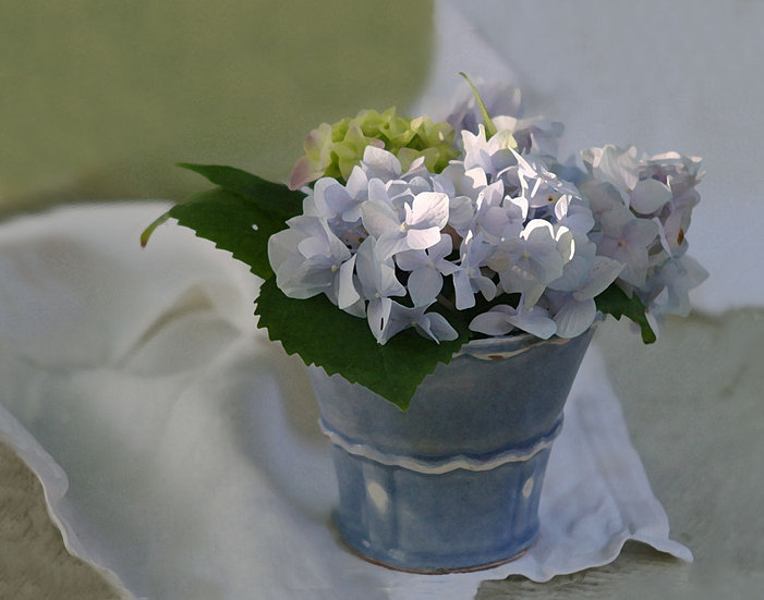 Purple Hydrangea in Blue Vase- Landscape Orientation