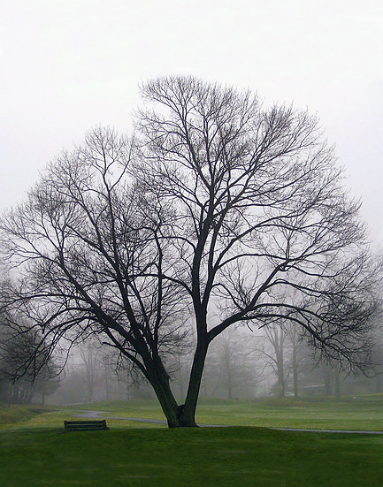 Golf Course Tree - Portrait Orientation