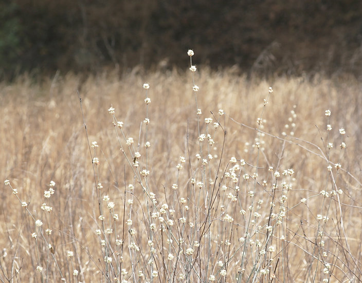 Complex Simplicity- Landscape Orientation