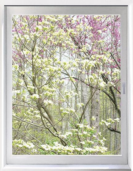 UW_Spring Woods - Portrait Orientation