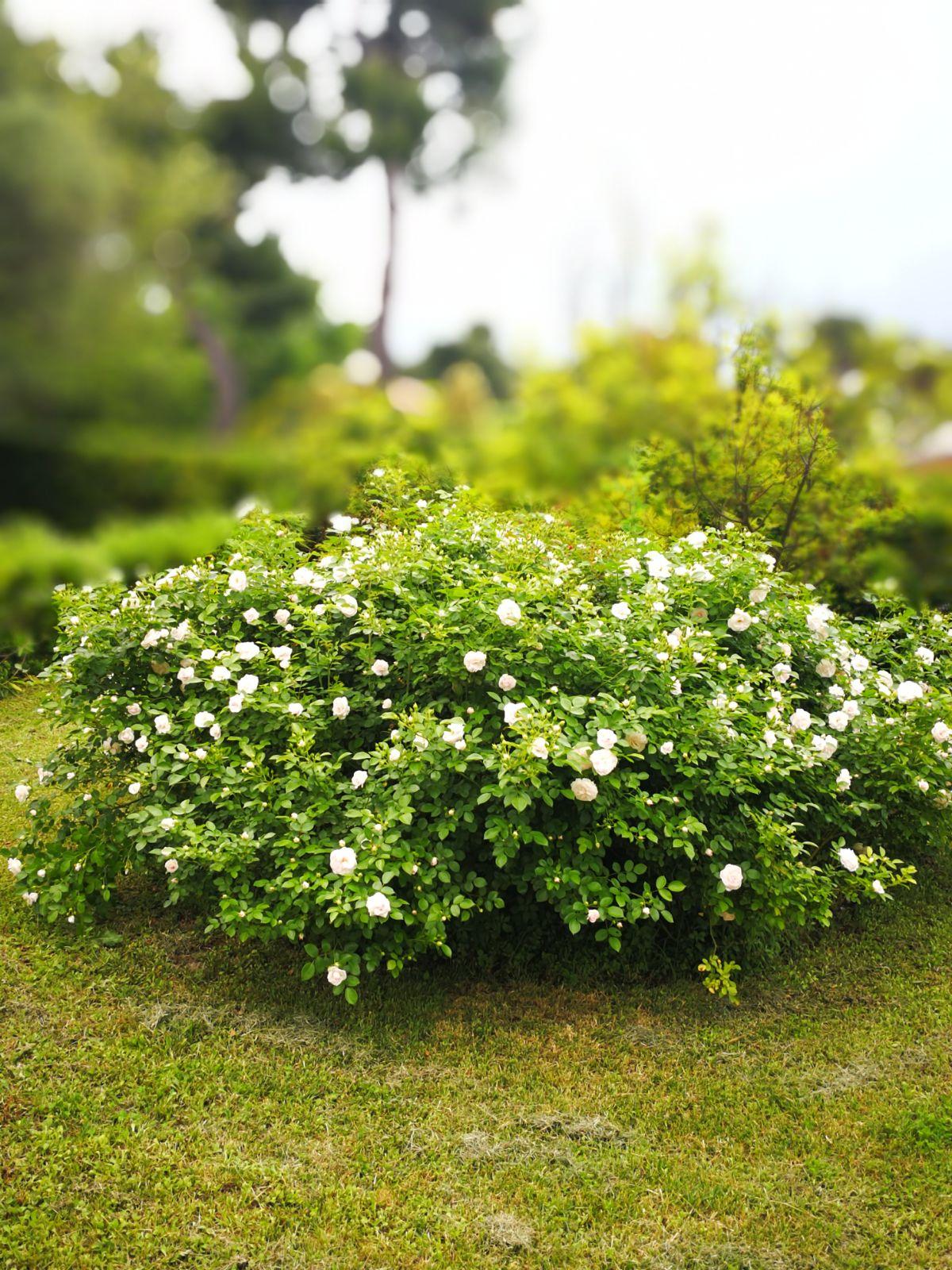esterno fiori 1
