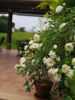 esterno fiori