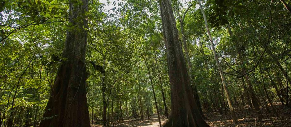 A polêmica mineração na Amazônia e o impacto da decisão federal