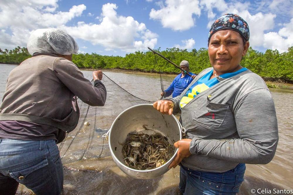 O sustento vem do mangue; A força é das mulheres. (Foto: Celia Santos)