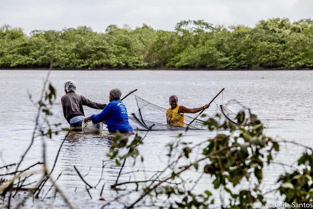Elas entram nas águas sem cerimônia para esticar as redes. (Foto: Celia Santos)