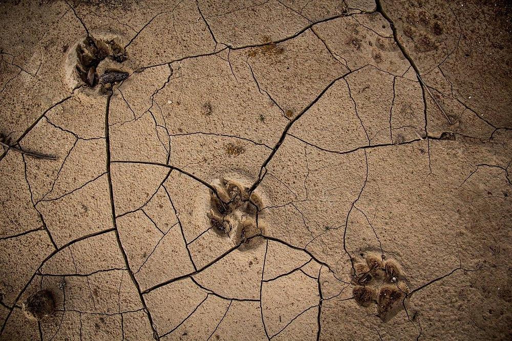 Seca enfrentada pelo moradores da tradicional região do congo exige busca por novas alternativas de sobrevivência. (Foto: Rafa Yamamoto)