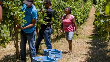 Irrigação com base em agricultura familiar altera Ilha do Massangano