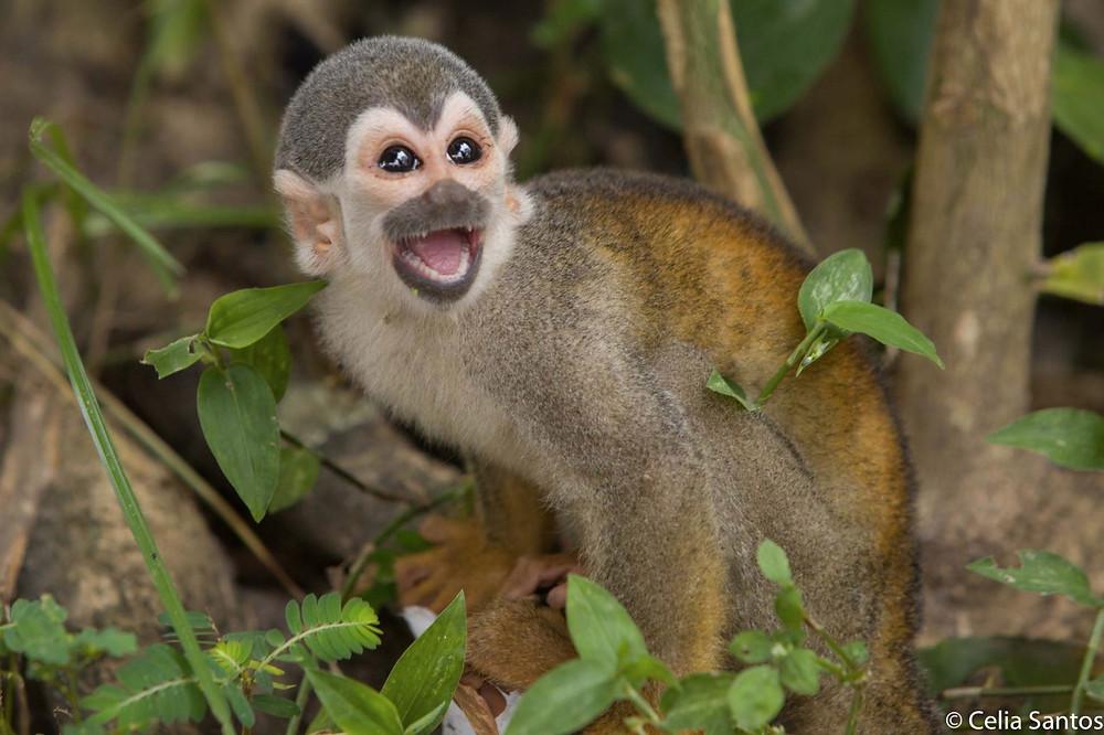 O macaco abriu a discussão quebrando alguns tabus dentro da sala de aula.