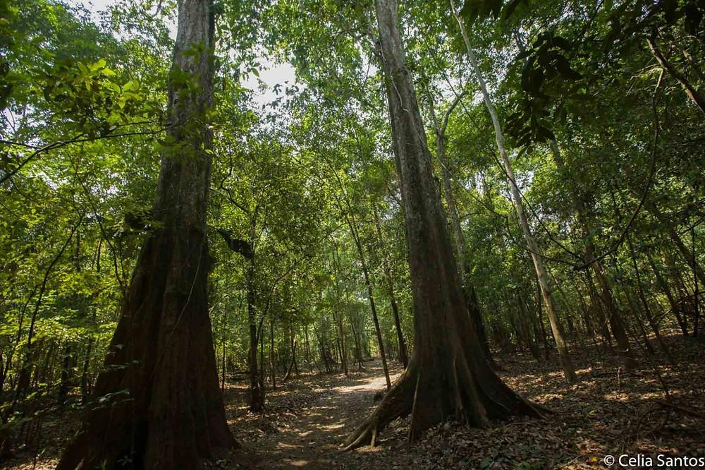 Permissão para exploração mineral acende alerta sobre preservação da Amazônia. (Foto: Divulgação)