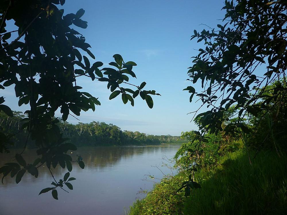 Caravana das Artes vai desbravar a Floresta Amazônica e levar metodologia educacional às aldeias indígenas distantes (Foto: Divulgação)