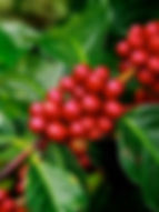 Original Blend、芳醇な香り、スペシャルティコーヒー、カフェインレスコーヒー、オーガニックコーヒー、日の出珈琲、Hinode Coffee、KAORU MOKA、ヘーゼルナッツ燻製