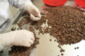 hinode-farm-coffee-bean
