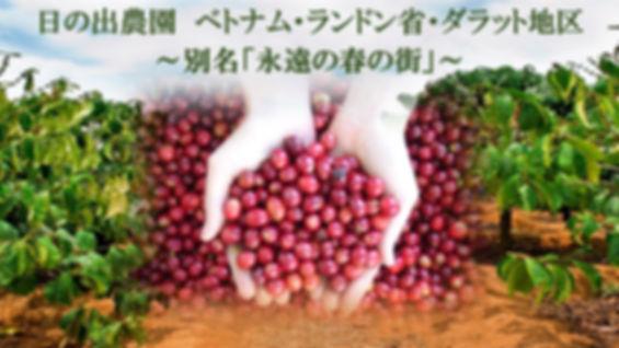 日の出珈琲、日の出農園、ベトナム、ラムドン省、ダラット地区、芳醇な香り、スペシャルティコーヒー、カフェインレスコーヒー、オーガニックコーヒー、日の出珈琲、Hinode Coffee、KAORU MOKA、ヘーゼルナッツ燻製