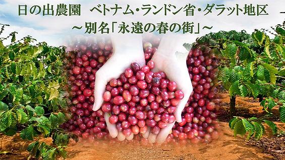 芳醇な香り、スペシャルティコーヒー、カフェインレスコーヒー、オーガニックコーヒー、日の出珈琲、Hinode Coffee、KAORU MOKA、ヘーゼルナッツ燻製、ベトナムコーヒー、ラムドン省、ダラット地区