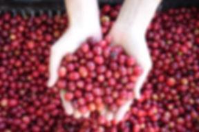 コーヒーの効能・効果、芳醇な香り、スペシャルティコーヒー、カフェインレスコーヒー、オーガニックコーヒー、日の出珈琲、Hinode Coffee、KAORU MOKA、ヘーゼルナッツ燻製