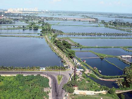 A study of East Kolkata Wetlands