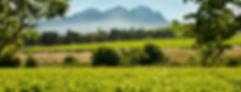 wineries-Hartenberg-banner.jpg