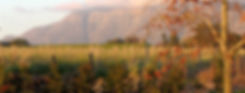 wineries-Post-House-banner.jpg