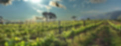 wineries-Stanford-Hills-banner.jpg